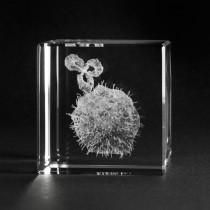 3D Lasergravur. Modell Krebszelle in Kristall