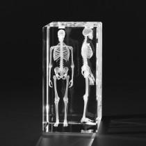 3D Modell menschliches Skelett, Knochenmodell, 3D Anatomie des Menschen in Glas gelasert