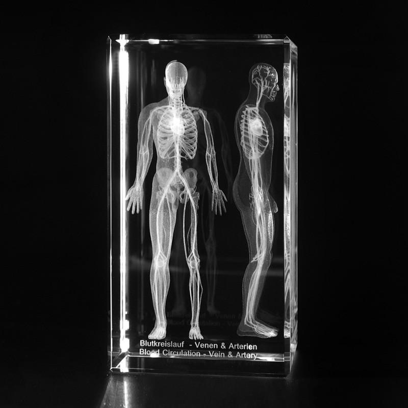 3D Anatomie – Körperaufbau, Blutkreislauf des Menschen in 3D Glas