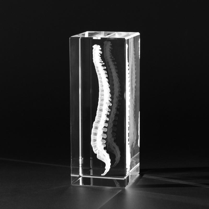3D Anatomie – Dreidimensionale menschliche Wirbelsäule in Kristallglas