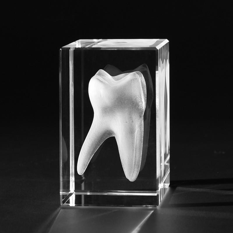 3D Zahnmodell – 3D Backenzahn Molar in Kristallglas gelasert