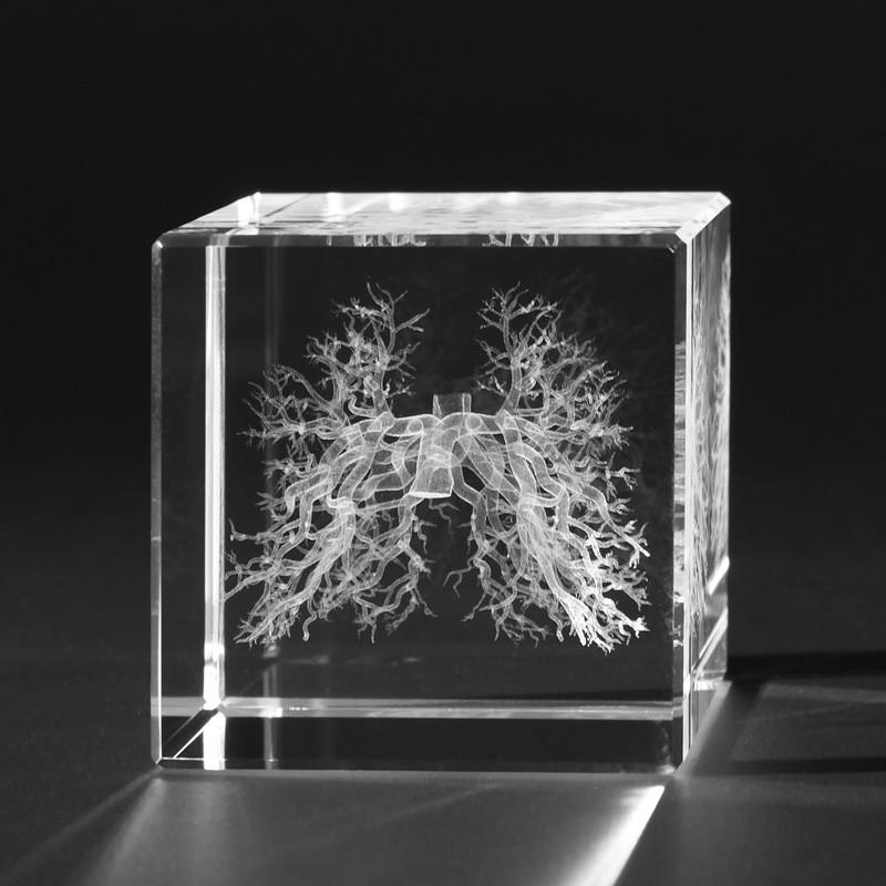 3D Anatomie – 3D Modelle - Bronchien in Kristallglas gelasert