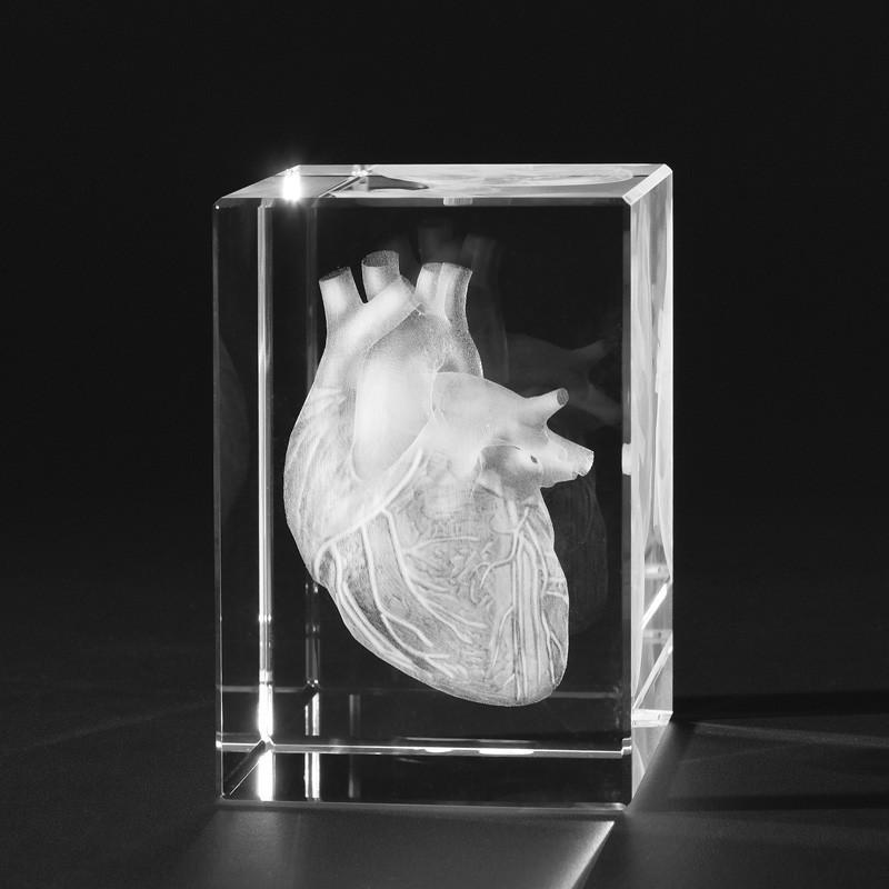 3D Anatomie – Innere Organe in 3D - Herz in Kristallglas gelasert