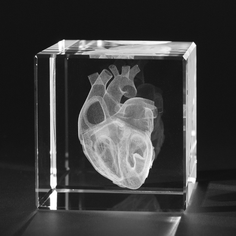 3D Medizinische Modelle - 3D Anatomie - Offenes Herz in Kristallglas