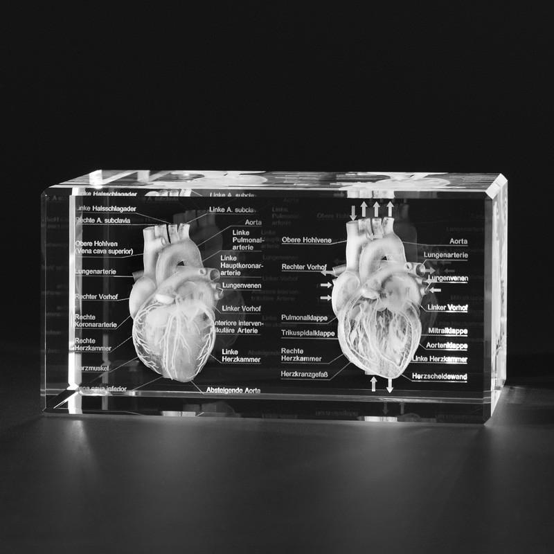 3D Anatomie Modell – Zwei Herzen mit Beschreibung in Kristallglas