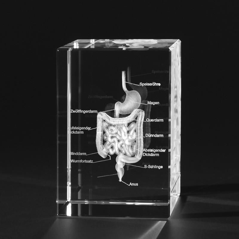 3D Anatomie – 3D Menschlicher Verdauungstrakt Tone in Kristallglas