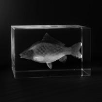 3D Karpfen in Laserglas