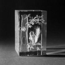 3D Laserglas mit Gravur. Motiv Eichhörnchen 3D Glas