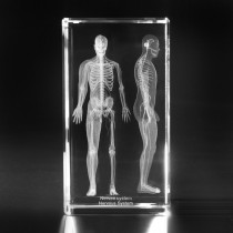 3D Modell Mensch in Glas. Nervensystem in Kristall gelasert