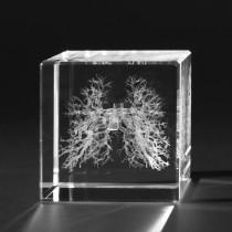 Innere Organe 3D in Kristallglas, Bronchien Modell des Menschen