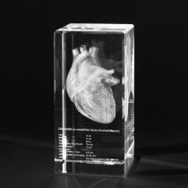 Menschliches Herz mit Eigenschaften 3D in Glas gelasert. 3D Crystal Anatomie Motive