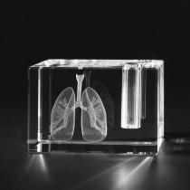 3D Modell menschliche Lunge im Glas-Stiftehalter. Anatomische Motive, innere Organe in Kristallglas gelasert