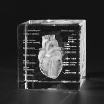 3D Geschlossenes Herz Modell des Menschen mit Eigenschaften in Glas gelasert. Anatomische Motive