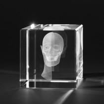Halb offener menschlicher Kopf in 3D. Medizin Modell in Glas