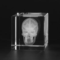 3D Modell vom menschlichen Schädel, Anatomie in Glas
