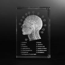 Schädel Modell in Glas