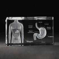 Magenmodell mit Beschreibung